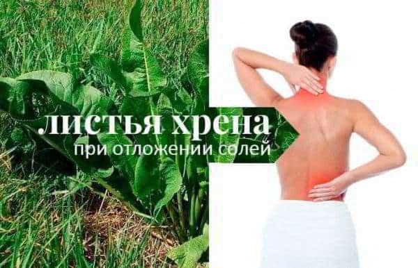 Лечение суставов хреном