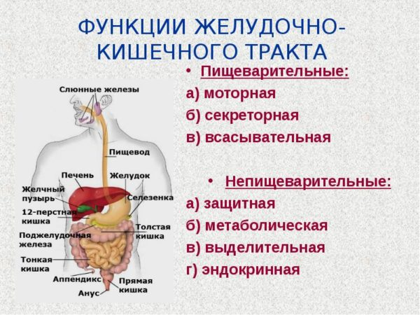 Функции желудочно кишечного тракта