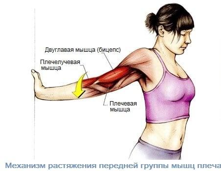 механизм растяжения передней группы мышц плеча