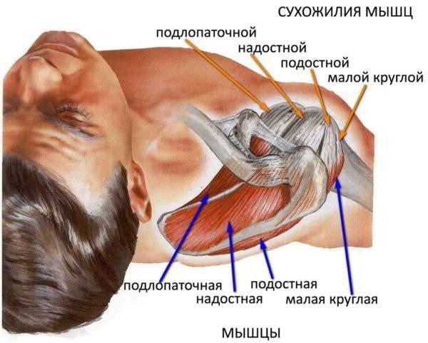 Изображение - Деформирующий остеоартроз правого плечевого сустава DOA_plechevogo_sustava_2-600x481
