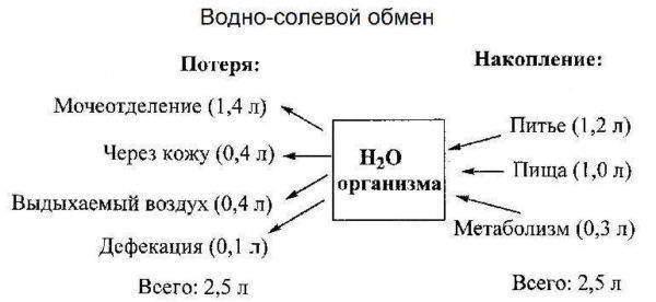 Изображение - Настойка лопуха для суставов Vodno-solevoj-obmen-600x276