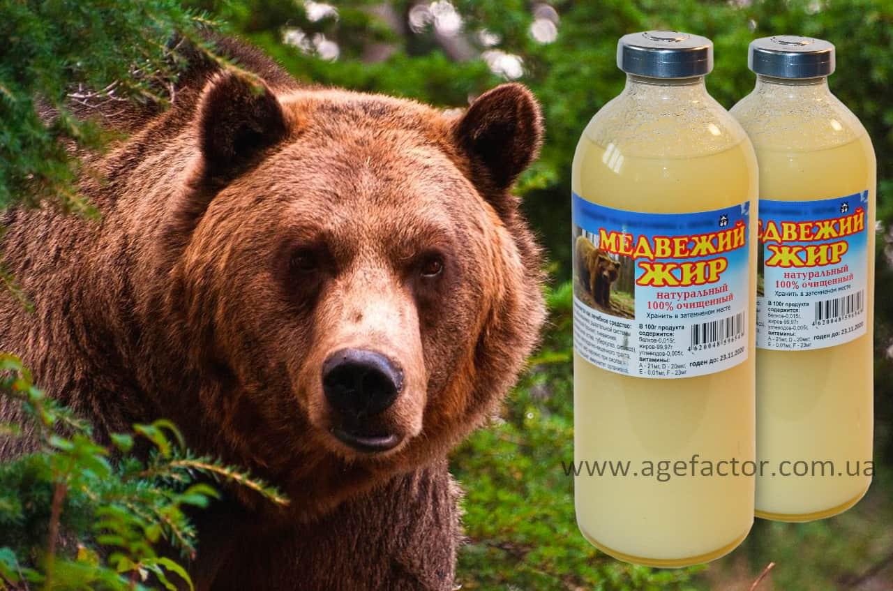 Применение медвежьего жира при артрозе и артрите