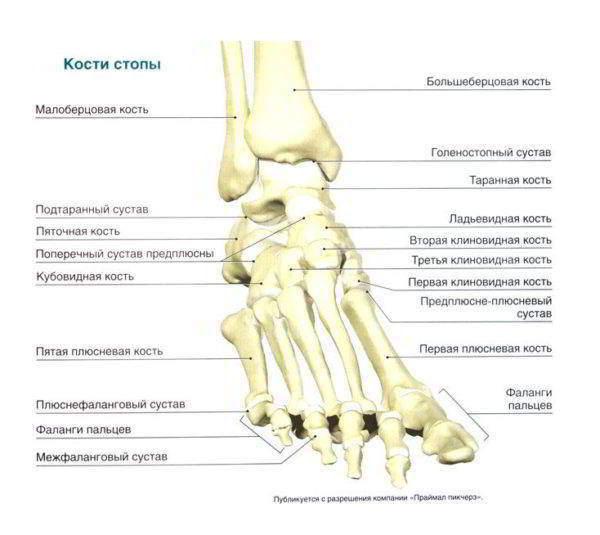 Изображение - Как восстановить жидкость в коленном суставе stroenie_sustava_1-600x535