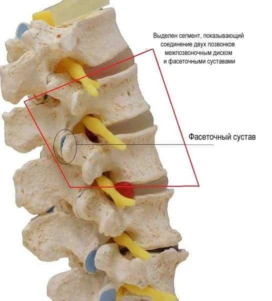 Изображение - Остеоартрит фасеточных суставов vse-ob-artroze-dugootroschatyh-sustavovu-544x600